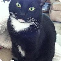 Adopt A Pet :: Kelli - Battle Ground, WA