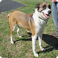 Adopt A Pet :: Jacob - Reeds Spring, MO
