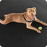 Adopt A Pet :: Simon - Hedgesville, WV