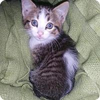Adopt A Pet :: Pepe - Houston, TX