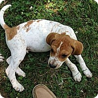 Adopt A Pet :: Keifer - New Boston, NH