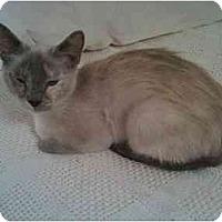 Adopt A Pet :: Holly - Greenville, SC