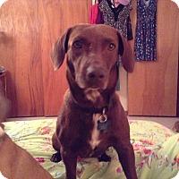 Adopt A Pet :: Patty - Pinellas Park, FL