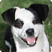 Adopt A Pet :: Carl - Edmonton, AB