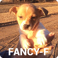 Adopt A Pet :: Fancy - Southington, CT