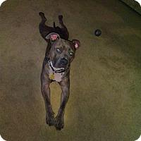 Adopt A Pet :: Rex - Pomfret, CT
