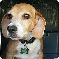 Adopt A Pet :: Harley - Hamilton, GA