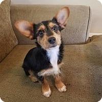Adopt A Pet :: Chris Pratt - Redmond, WA