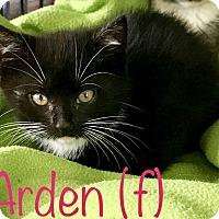 Adopt A Pet :: Arden - Island Park, NY
