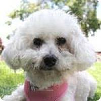 Adopt A Pet :: Precious - La Costa, CA