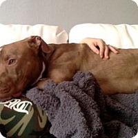 Adopt A Pet :: McCoy - Montreal, QC