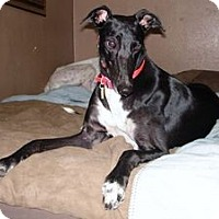 Adopt A Pet :: Linda - Canadensis, PA