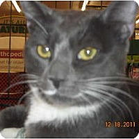 Adopt A Pet :: Henry - Riverside, RI