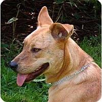 Adopt A Pet :: Sophia - Seattle, WA
