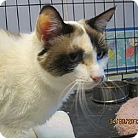 Adopt A Pet :: Annette - Sterling Hgts, MI