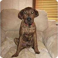 Adopt A Pet :: Scrappy & Walter - Acme, PA