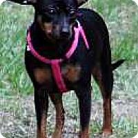 Adopt A Pet :: Mimi - McDonough, GA