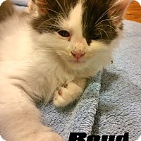 Adopt A Pet :: Boyd - McDonough, GA