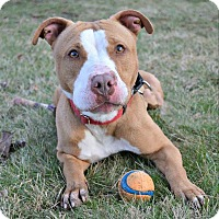Adopt A Pet :: Gabby - Cranford, NJ