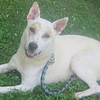 Husky Mix Dog for adoption in Hillsboro, Ohio - Bess
