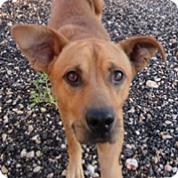 Adopt A Pet :: Chance - Von Ormy, TX