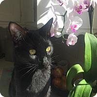 Adopt A Pet :: Chappell - Los Angeles, CA