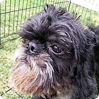 Adopt A Pet :: TAD - ADOPTION PENDING - Mesa, AZ