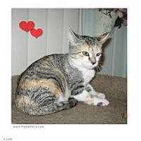 Adopt A Pet :: Lola - Catasauqua, PA