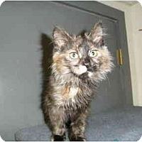 Adopt A Pet :: Hershey - Milwaukee, WI