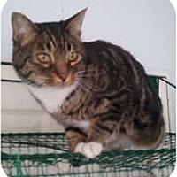 Adopt A Pet :: Bijou - Anchorage, AK
