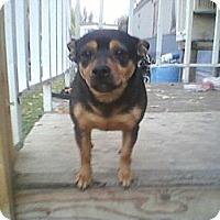 Adopt A Pet :: Salina - Seattle, WA