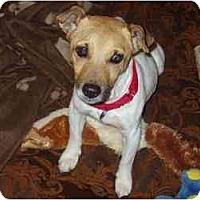 Adopt A Pet :: Hailey in Houston - Houston, TX