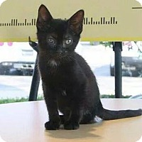 Adopt A Pet :: Stella - West Dundee, IL