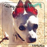 Adopt A Pet :: Merry - Phoenix, AZ