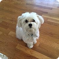 Adopt A Pet :: Niki - Gig Harbor, WA