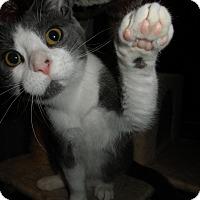 Adopt A Pet :: Jumana - Milwaukee, WI