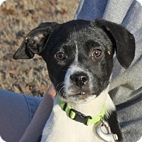Adopt A Pet :: Sophie - PENDING, in Maine - kennebunkport, ME