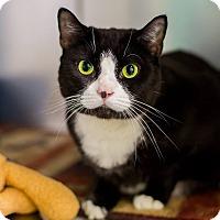 Adopt A Pet :: Babygirl - Mohawk, NY