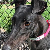 Adopt A Pet :: Odd Bristol - Longwood, FL