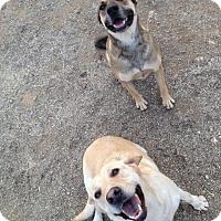 Adopt A Pet :: Dobie - Orange, CA