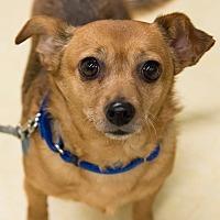Adopt A Pet :: Missy - Grass Valley, CA