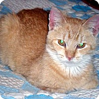 Adopt A Pet :: Angel - Kalamazoo, MI