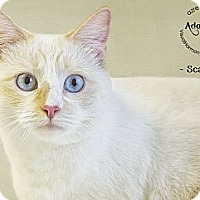 Adopt A Pet :: Scarlett - Phoenix, AZ