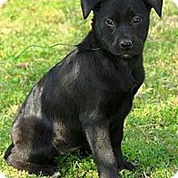 Adopt A Pet :: Aggie - Staunton, VA