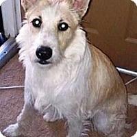 Adopt A Pet :: Goose - Gilbert, AZ