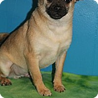 Adopt A Pet :: Kennedy - Wytheville, VA