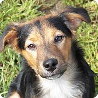 Adopt A Pet :: Casey - Braintree, MA
