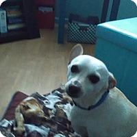 Adopt A Pet :: JUNIOR - Loveland, CO