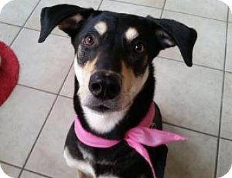 Shepherd (Unknown Type) Mix Dog for adoption in Dallas, Texas - Jojo