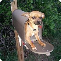 Adopt A Pet :: Mimi - Brooklyn Center, MN